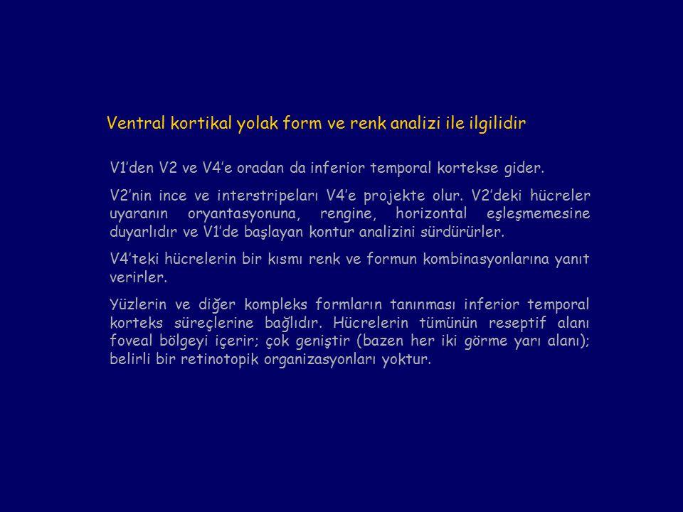Ventral kortikal yolak form ve renk analizi ile ilgilidir