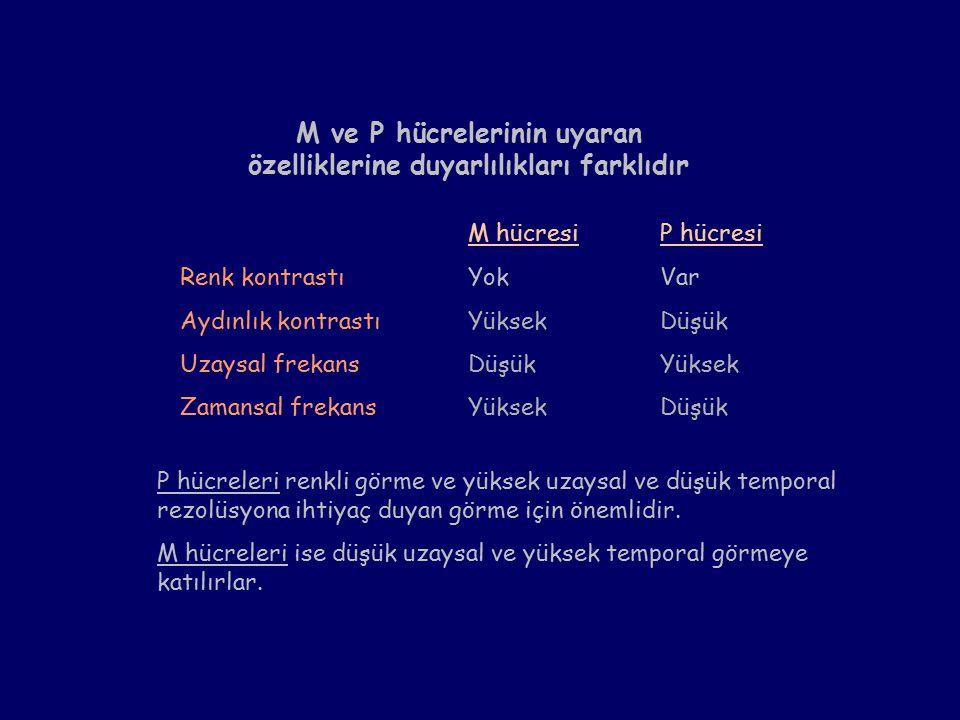 M ve P hücrelerinin uyaran özelliklerine duyarlılıkları farklıdır