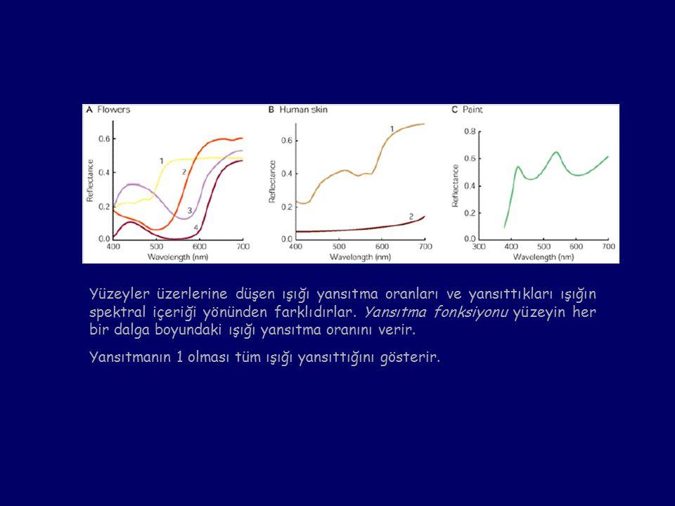 Yüzeyler üzerlerine düşen ışığı yansıtma oranları ve yansıttıkları ışığın spektral içeriği yönünden farklıdırlar. Yansıtma fonksiyonu yüzeyin her bir dalga boyundaki ışığı yansıtma oranını verir.
