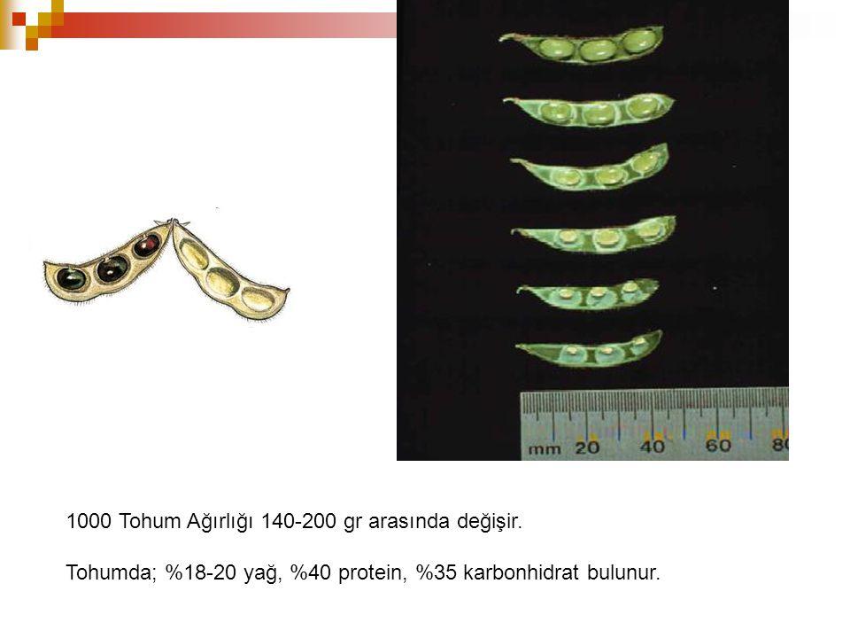 1000 Tohum Ağırlığı 140-200 gr arasında değişir.