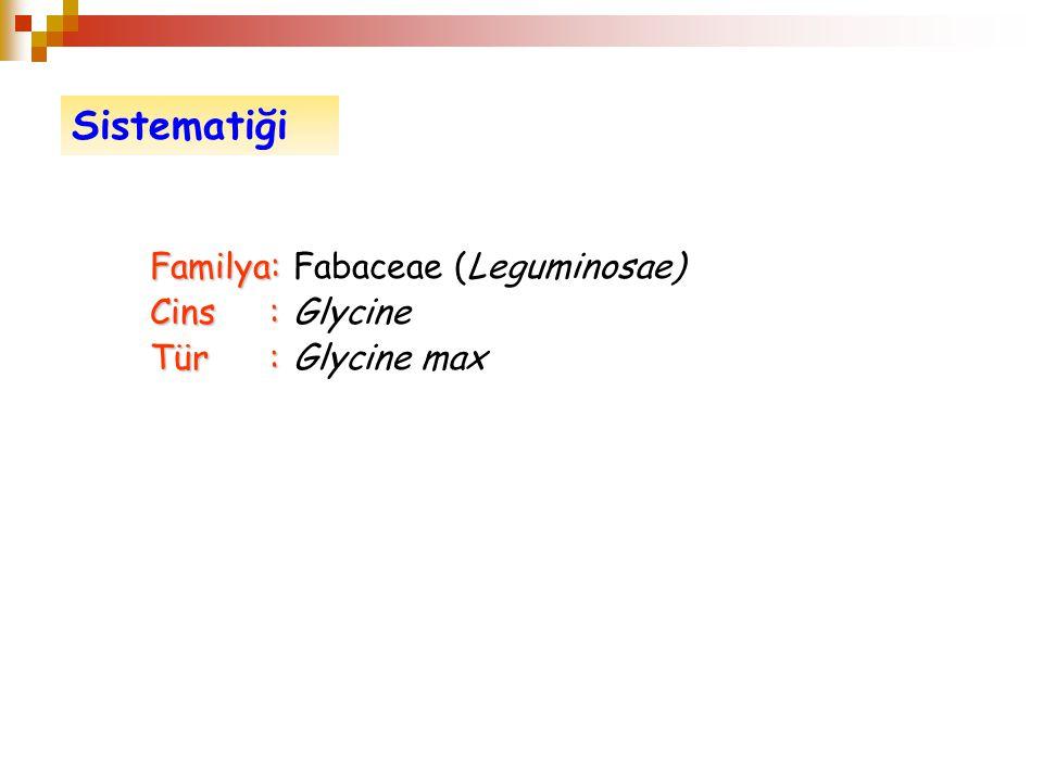 Sistematiği Familya: Fabaceae (Leguminosae) Cins : Glycine