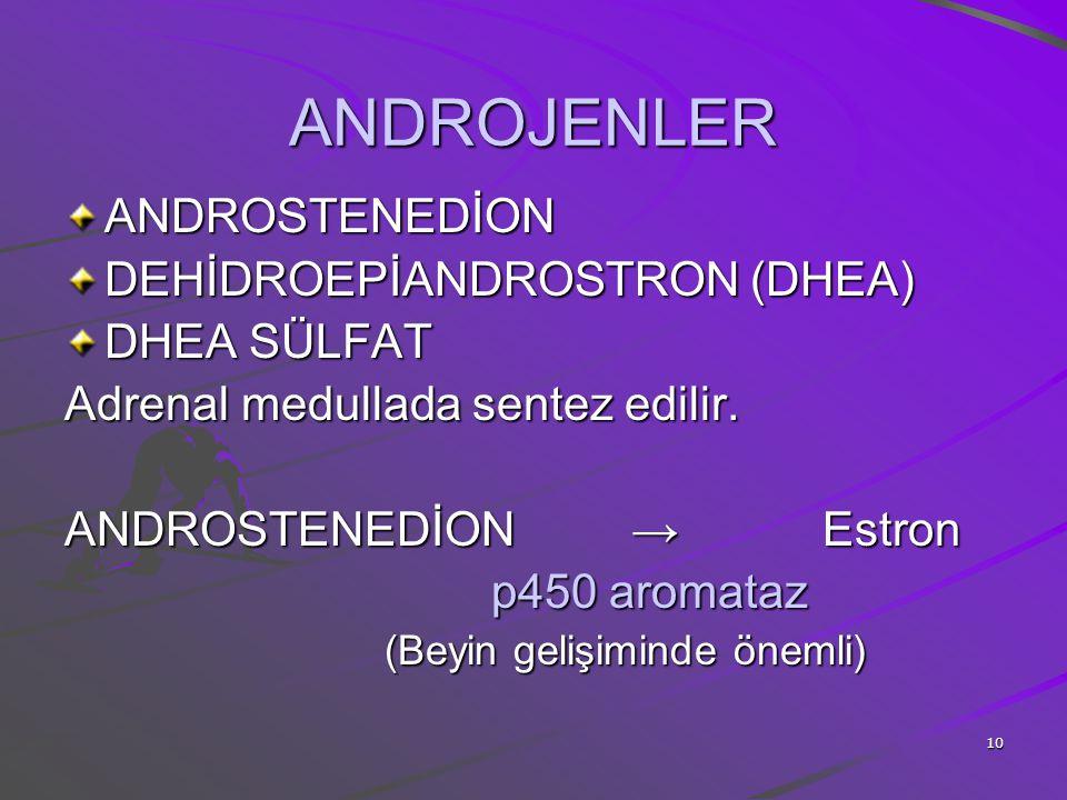 ANDROJENLER ANDROSTENEDİON DEHİDROEPİANDROSTRON (DHEA) DHEA SÜLFAT