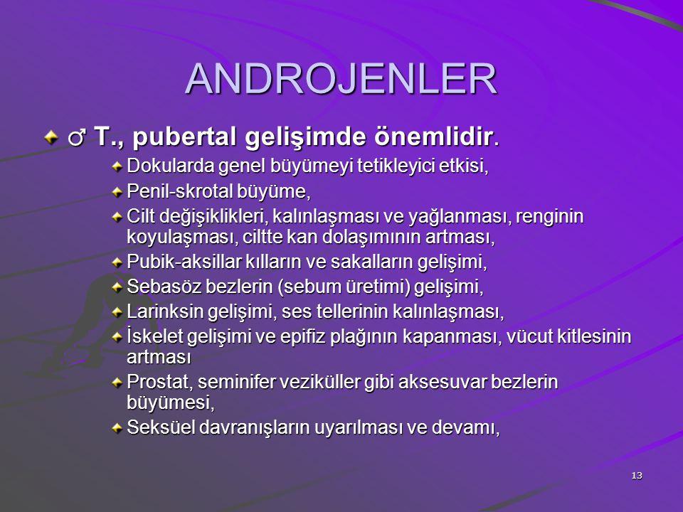 ANDROJENLER ♂ T., pubertal gelişimde önemlidir.