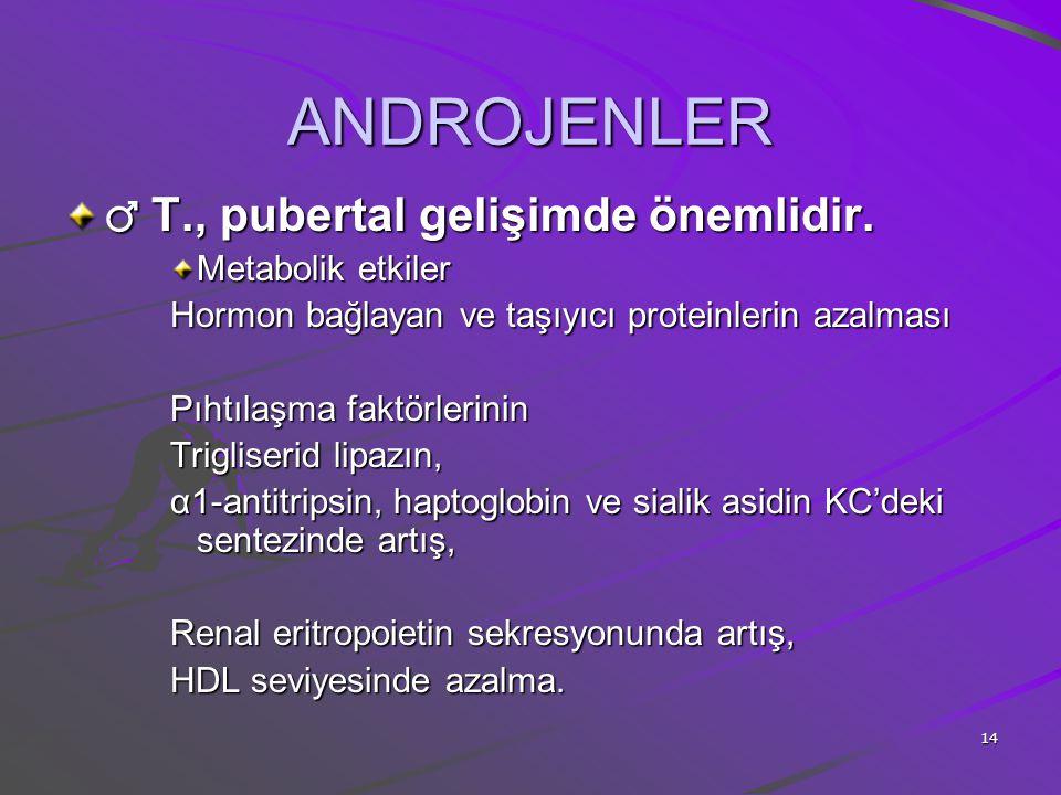 ANDROJENLER ♂ T., pubertal gelişimde önemlidir. Metabolik etkiler