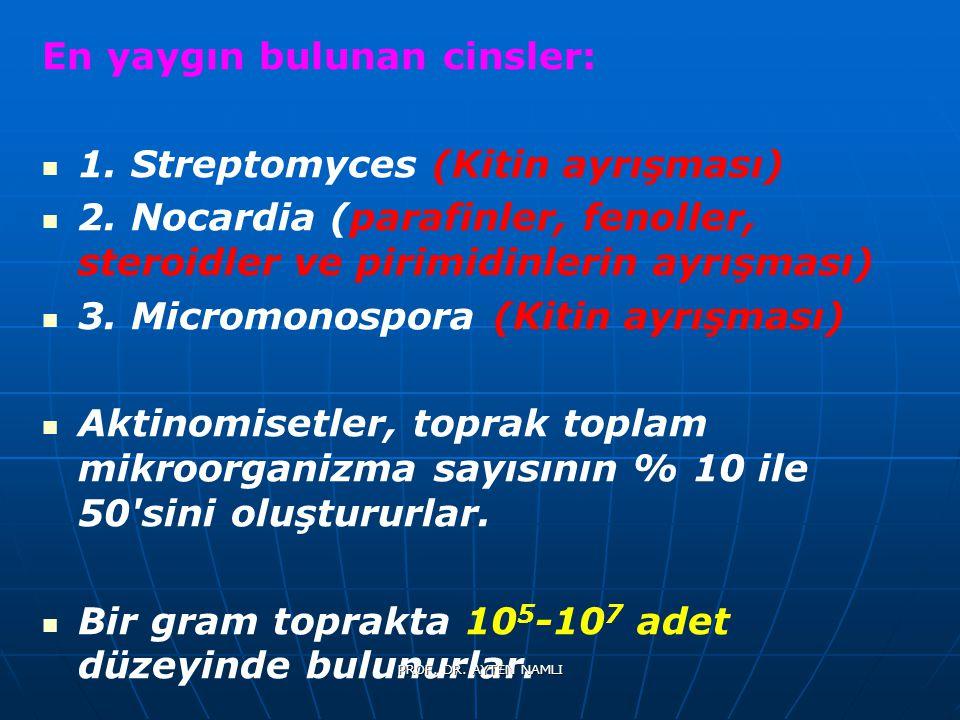 En yaygın bulunan cinsler: 1. Streptomyces (Kitin ayrışması)