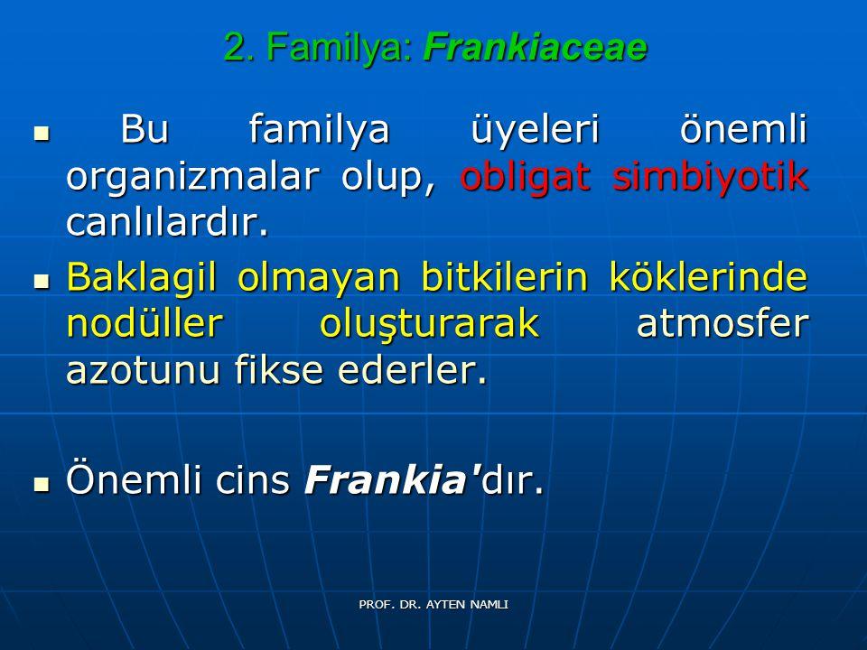 Önemli cins Frankia dır.