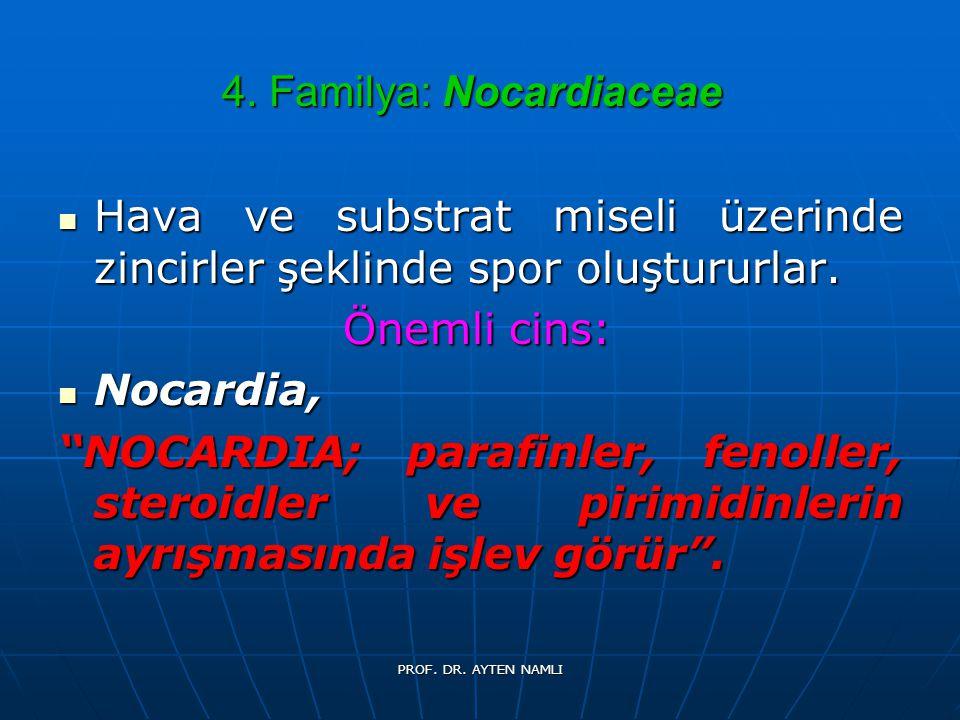 4. Familya: Nocardiaceae