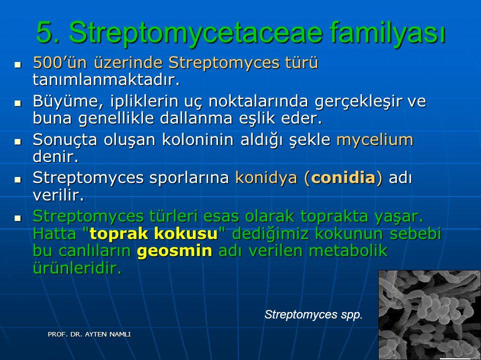 5. Streptomycetaceae familyası