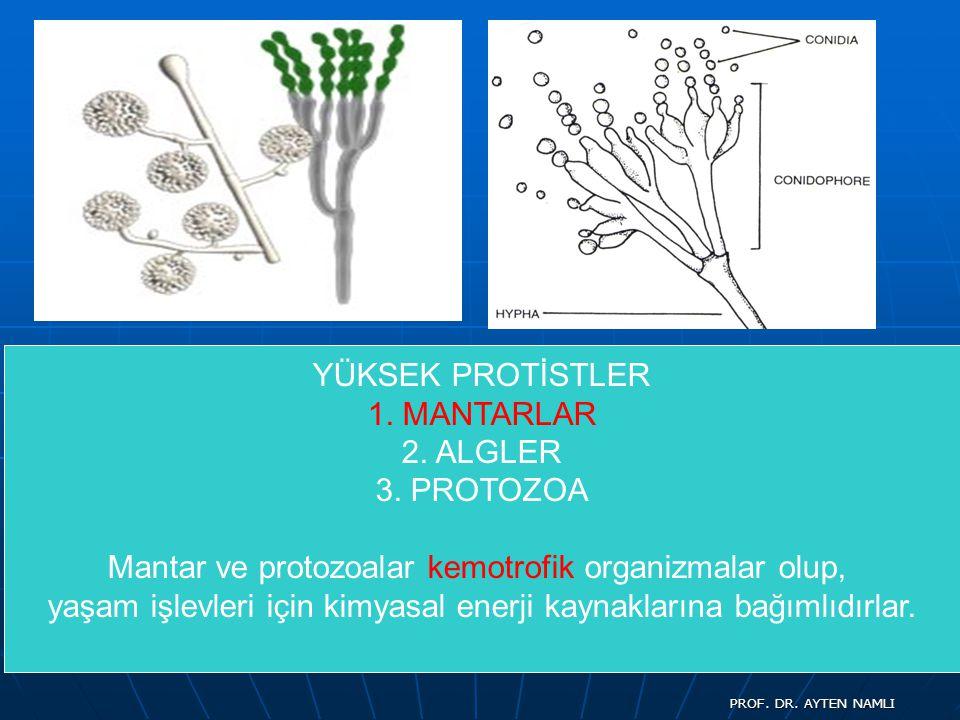 Mantar ve protozoalar kemotrofik organizmalar olup,