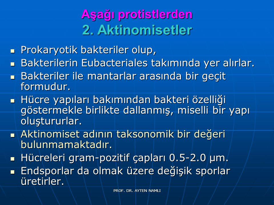 Aşağı protistlerden 2. Aktinomisetler