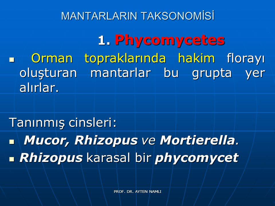 MANTARLARIN TAKSONOMİSİ