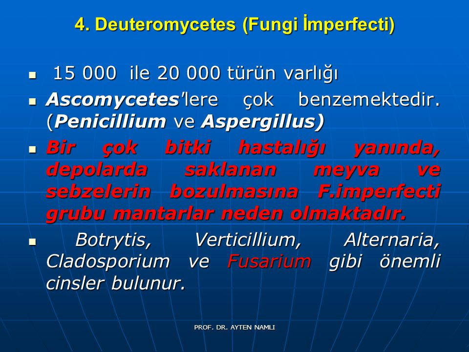 4. Deuteromycetes (Fungi İmperfecti)