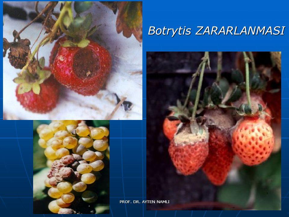Botrytis ZARARLANMASI