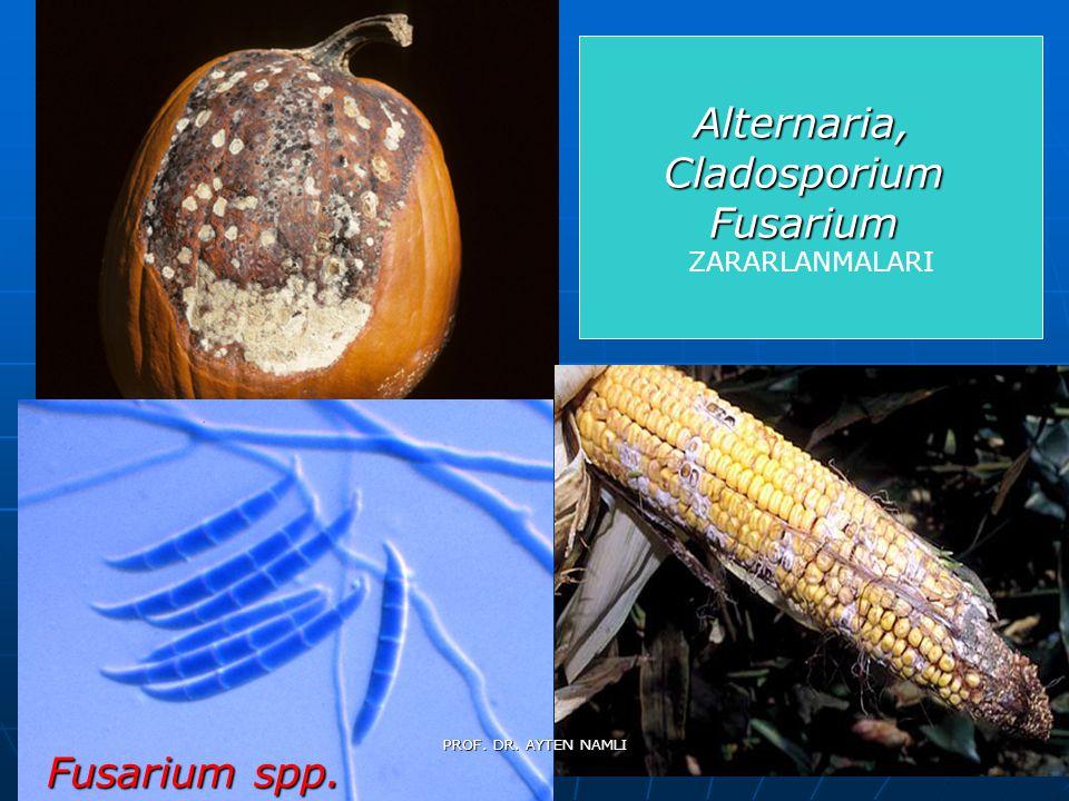 Alternaria, Cladosporium Fusarium Fusarium spp. ZARARLANMALARI