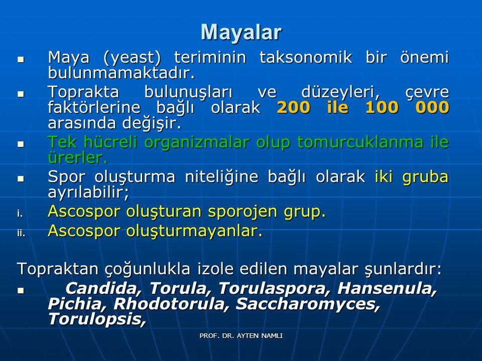 Mayalar Maya (yeast) teriminin taksonomik bir önemi bulunmamaktadır.