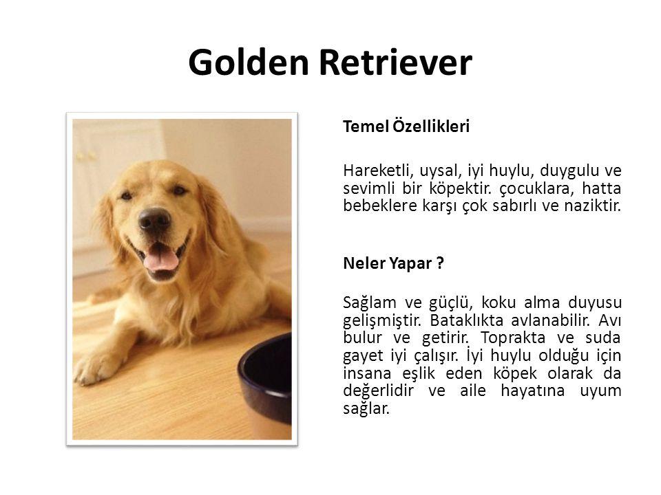 Golden Retriever Temel Özellikleri