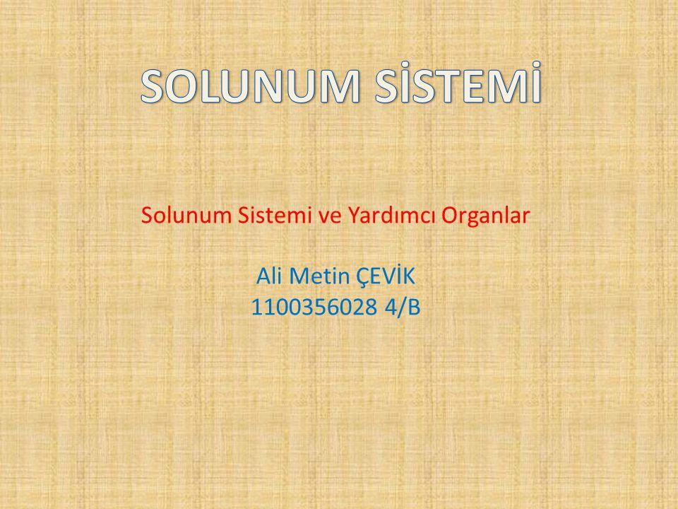 Solunum Sistemi ve Yardımcı Organlar Ali Metin ÇEVİK 1100356028 4/B