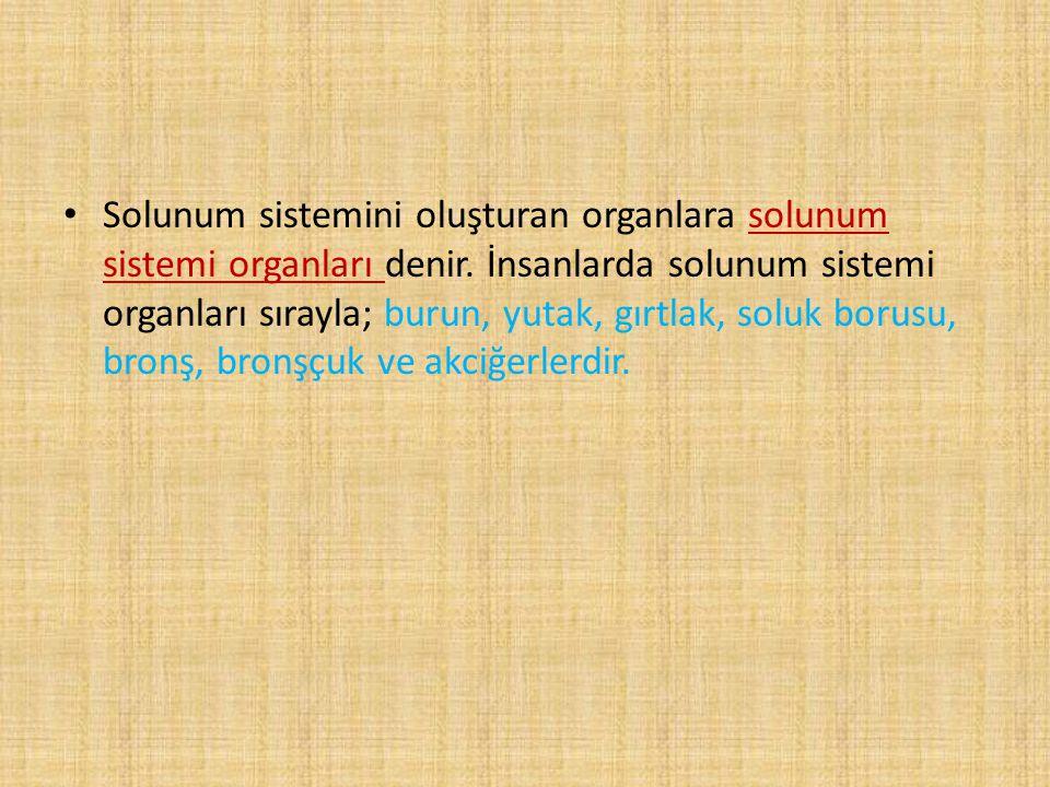 Solunum sistemini oluşturan organlara solunum sistemi organları denir