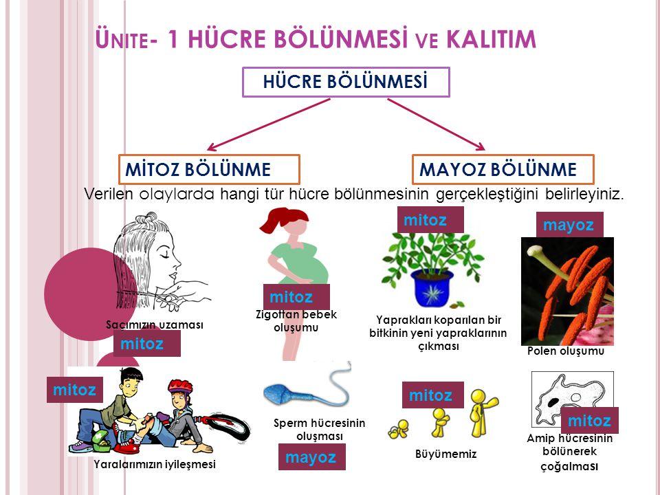 Ünite- 1 HÜCRE BÖLÜNMESİ ve KALITIM