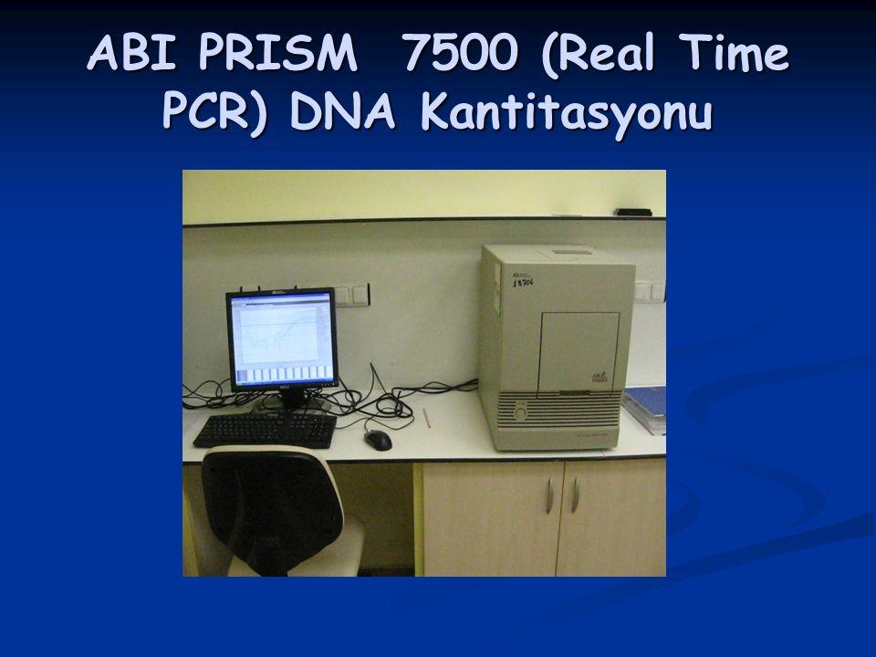 ABI PRISM 7500 (Real Time PCR) DNA Kantitasyonu