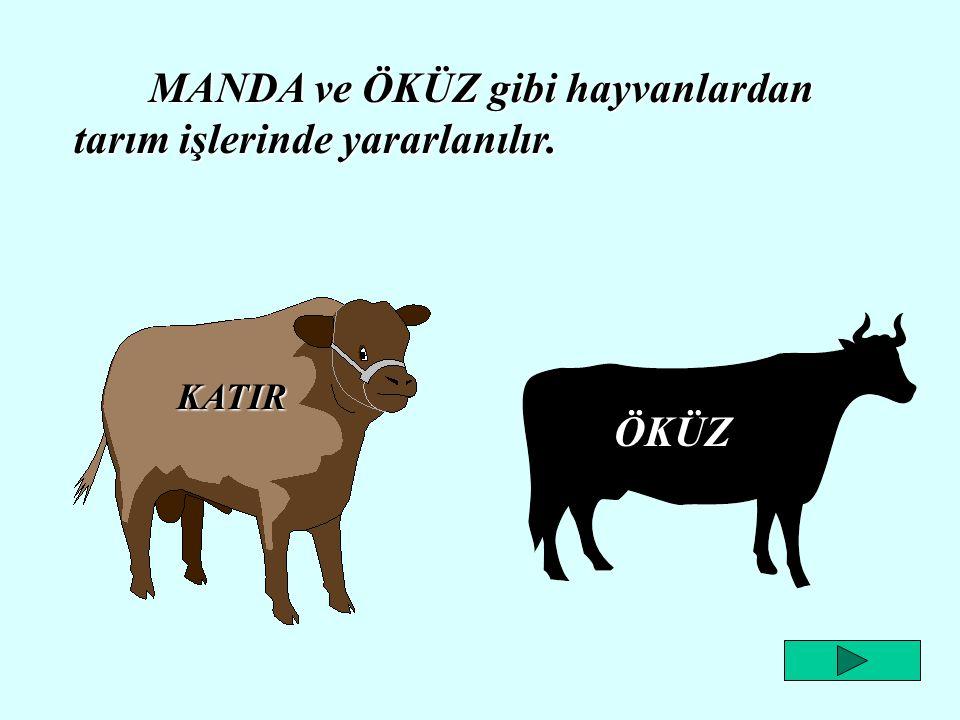 MANDA ve ÖKÜZ gibi hayvanlardan tarım işlerinde yararlanılır.