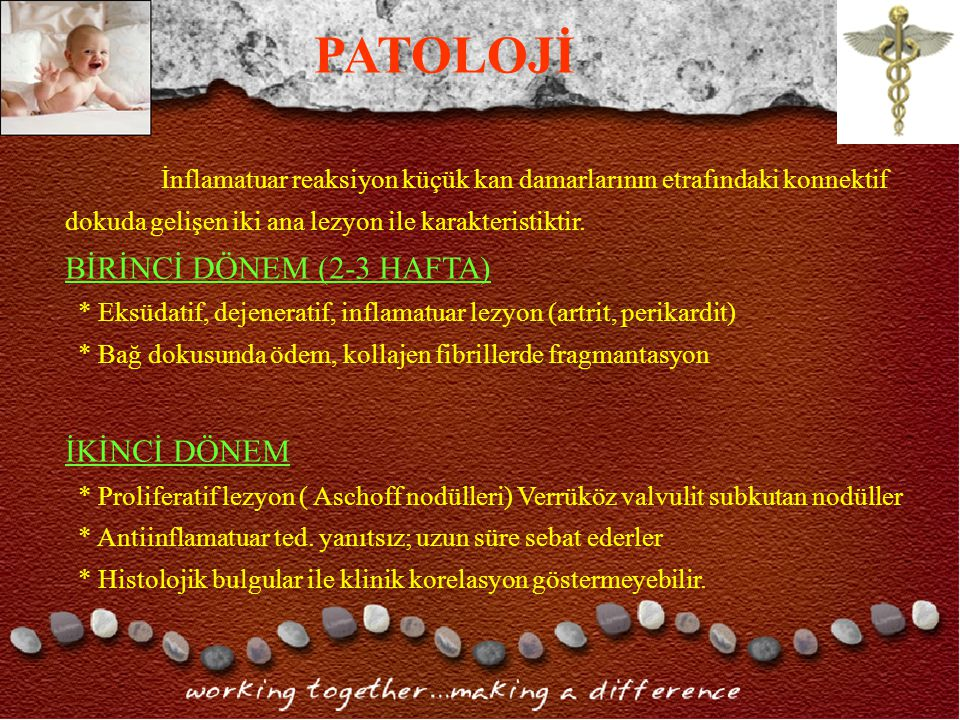 PATOLOJİ BİRİNCİ DÖNEM (2-3 HAFTA) İKİNCİ DÖNEM