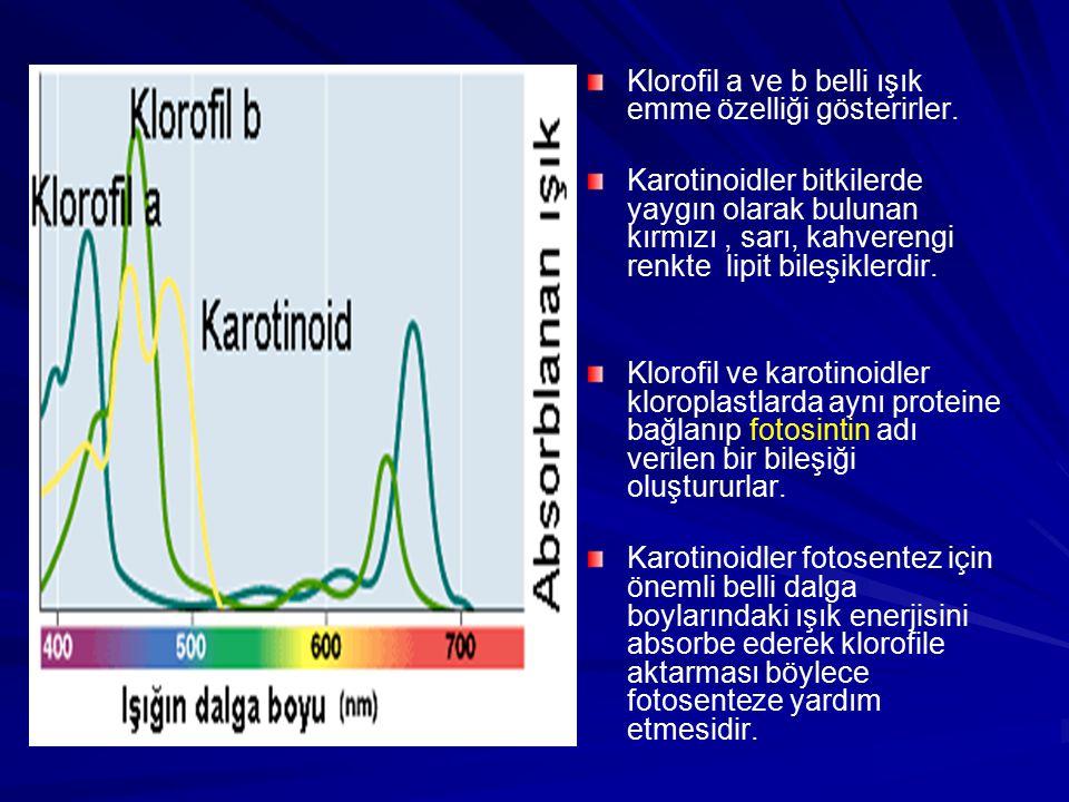 Klorofil a ve b belli ışık emme özelliği gösterirler.