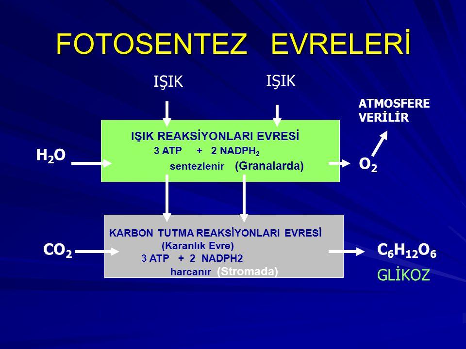 FOTOSENTEZ EVRELERİ IŞIK IŞIK H2O O2 CO2 C6H12O6 GLİKOZ