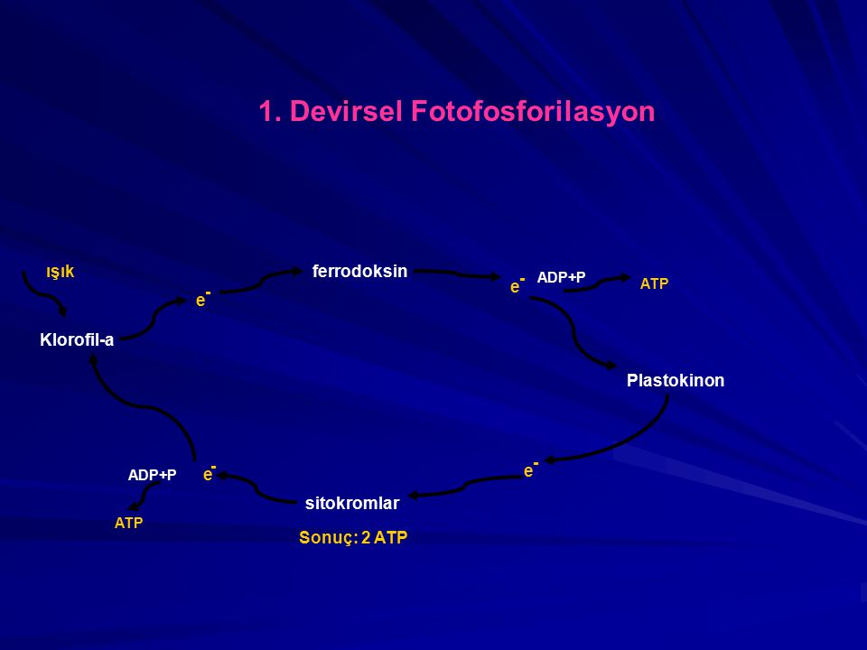 1. Devirsel Fotofosforilasyon