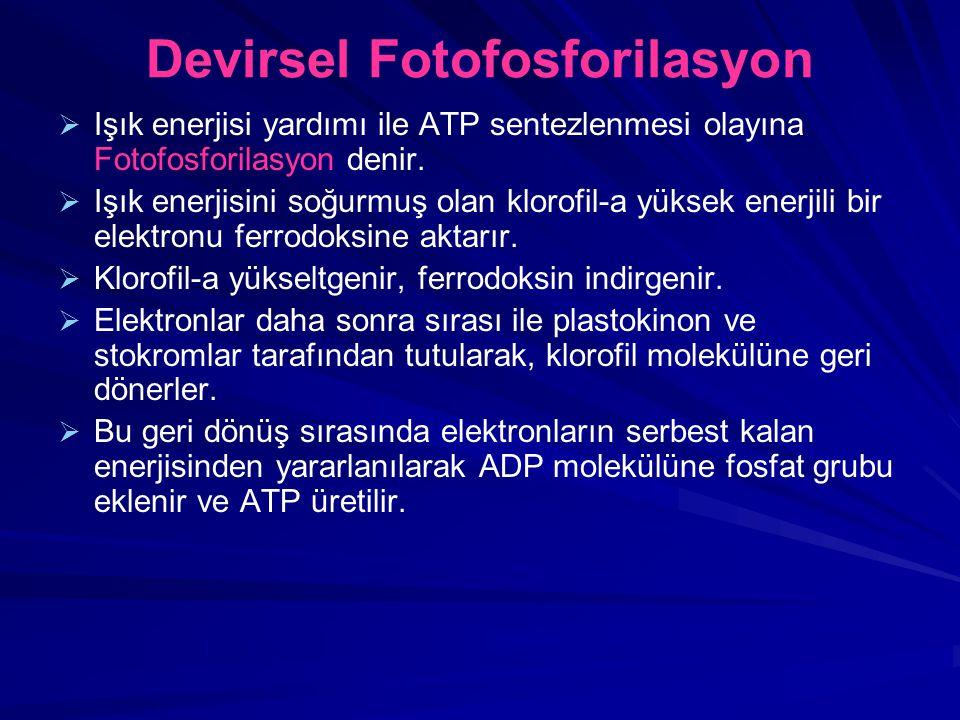 Devirsel Fotofosforilasyon