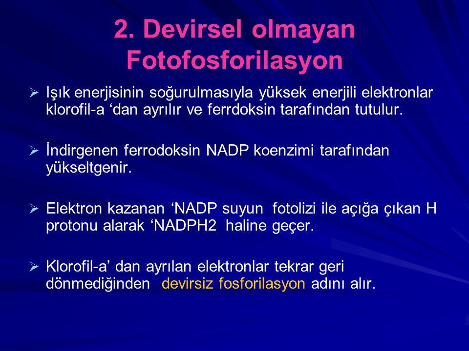 2. Devirsel olmayan Fotofosforilasyon