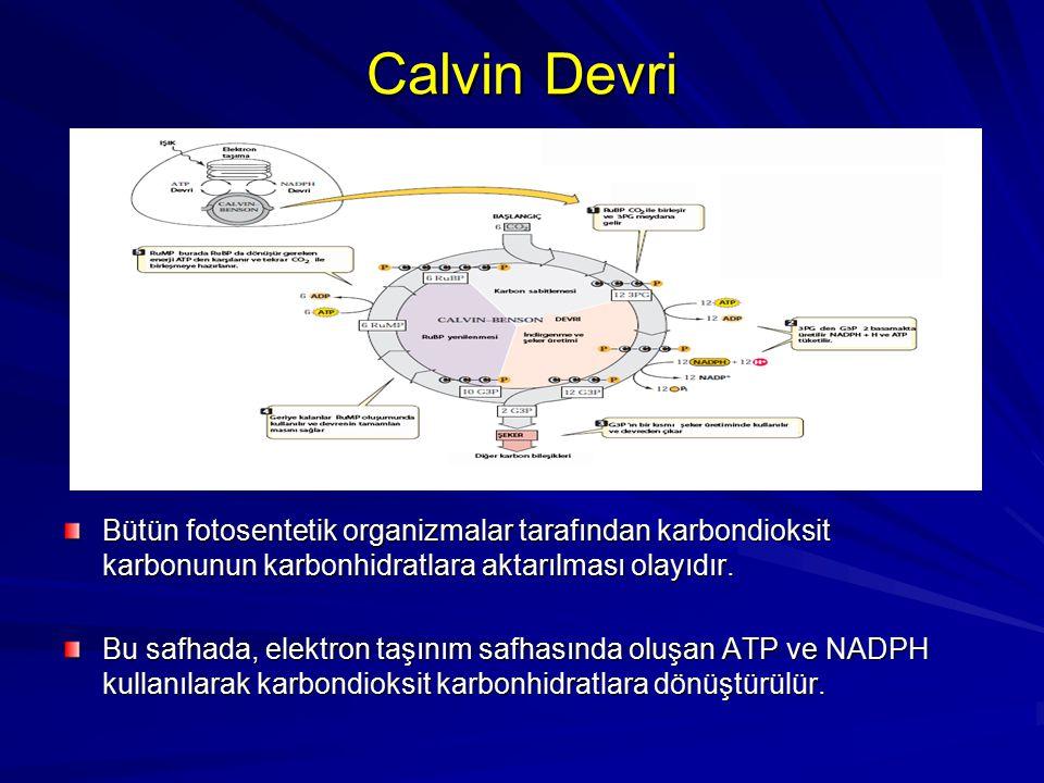 Calvin Devri Bütün fotosentetik organizmalar tarafından karbondioksit karbonunun karbonhidratlara aktarılması olayıdır.