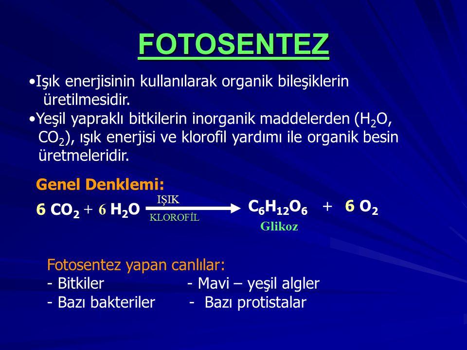 FOTOSENTEZ Işık enerjisinin kullanılarak organik bileşiklerin