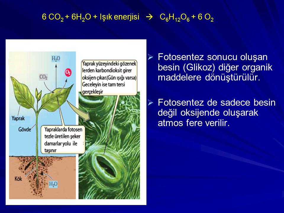6 CO2 + 6H2O + Işık enerjisi  C6H12O6 + 6 O2