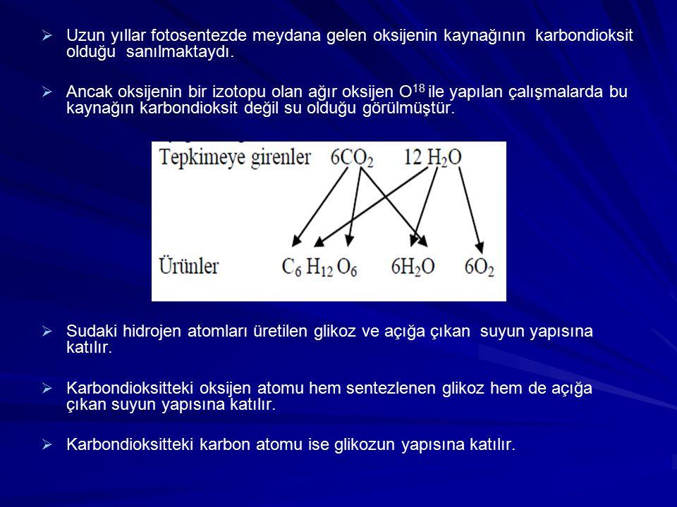 Uzun yıllar fotosentezde meydana gelen oksijenin kaynağının karbondioksit olduğu sanılmaktaydı.