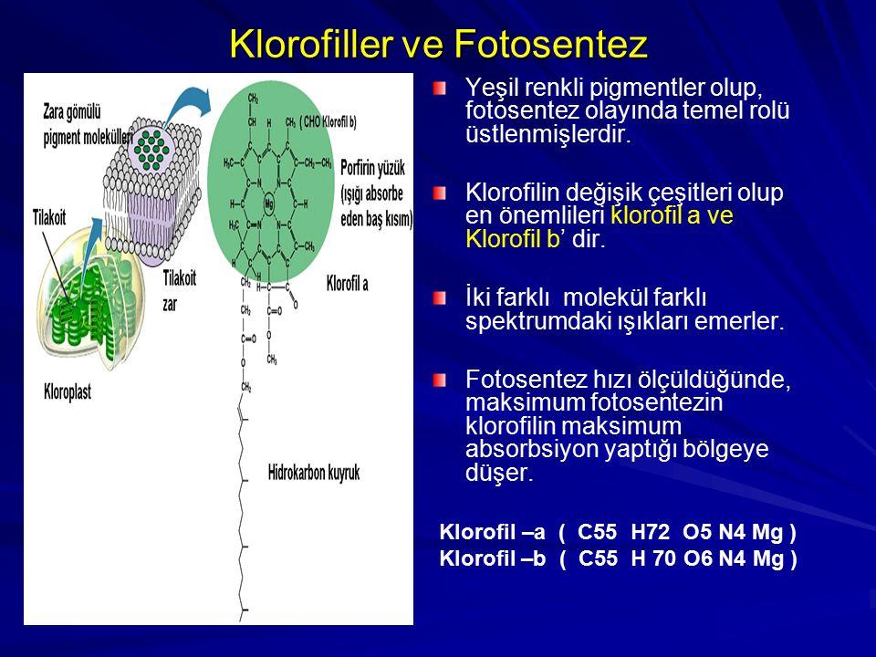 Klorofiller ve Fotosentez