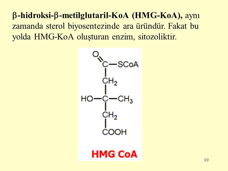 -hidroksi--metilglutaril-KoA (HMG-KoA), aynı zamanda sterol biyosentezinde ara üründür.