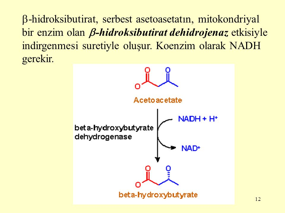 -hidroksibutirat, serbest asetoasetatın, mitokondriyal bir enzim olan -hidroksibutirat dehidrojenaz etkisiyle indirgenmesi suretiyle oluşur.