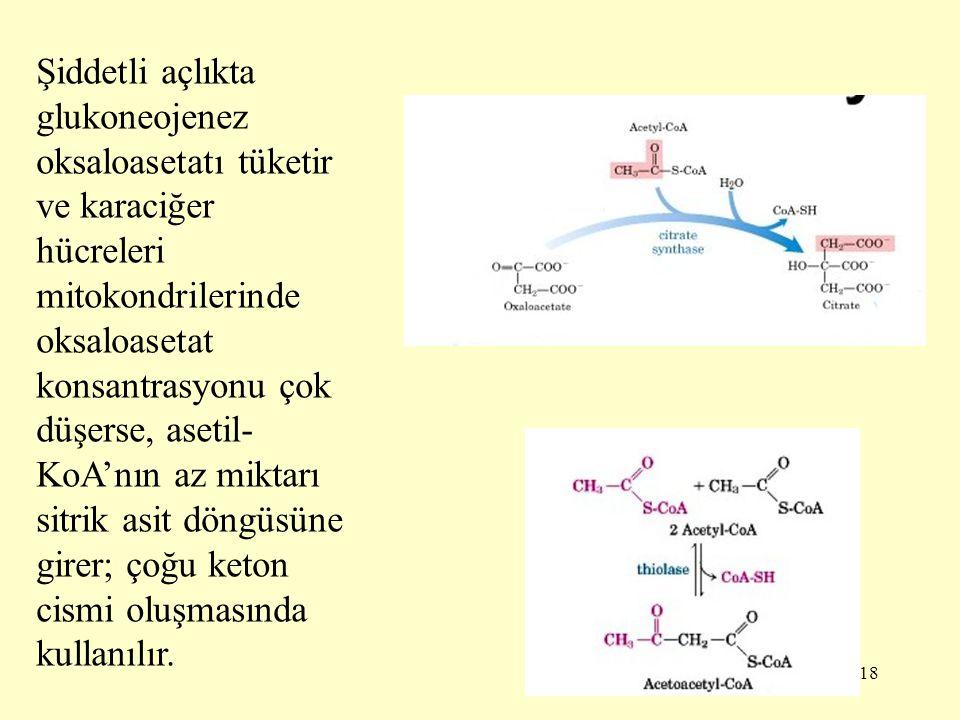 Şiddetli açlıkta glukoneojenez oksaloasetatı tüketir ve karaciğer hücreleri mitokondrilerinde oksaloasetat konsantrasyonu çok düşerse, asetil-KoA'nın az miktarı sitrik asit döngüsüne girer; çoğu keton cismi oluşmasında kullanılır.