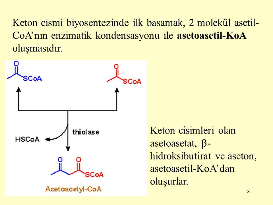 Keton cismi biyosentezinde ilk basamak, 2 molekül asetil-CoA'nın enzimatik kondensasyonu ile asetoasetil-KoA oluşmasıdır.