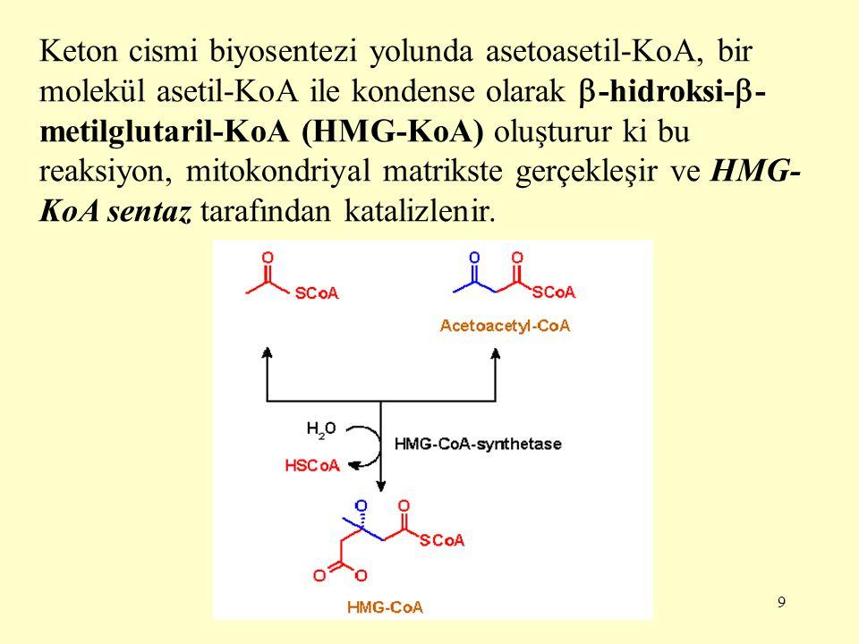 Keton cismi biyosentezi yolunda asetoasetil-KoA, bir molekül asetil-KoA ile kondense olarak -hidroksi--metilglutaril-KoA (HMG-KoA) oluşturur ki bu reaksiyon, mitokondriyal matrikste gerçekleşir ve HMG-KoA sentaz tarafından katalizlenir.