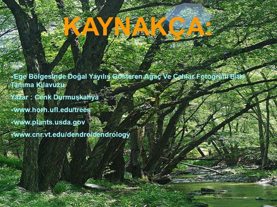 KAYNAKÇA: Ege Bölgesinde Doğal Yayılış Gösteren Ağaç Ve Çalılar Fotoğraflı Bitki Tanıma Kılavuzu. Yazar : Cenk Durmuşkahya.