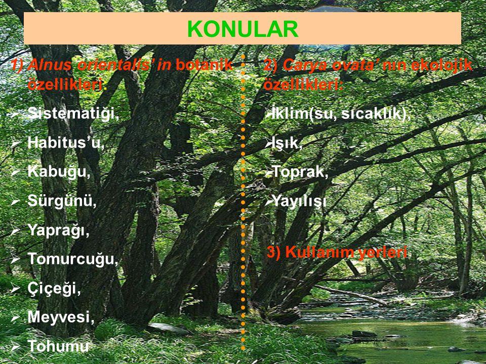 KONULAR Alnus orientalis' in botanik özellikleri: Sistematiği,