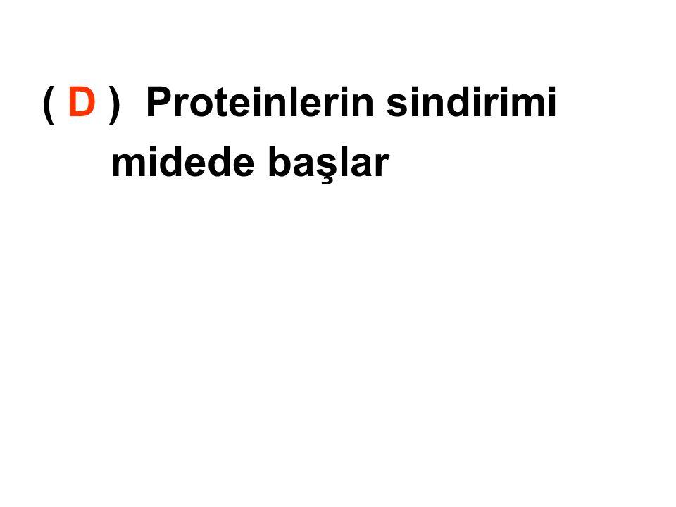 ( D ) Proteinlerin sindirimi midede başlar