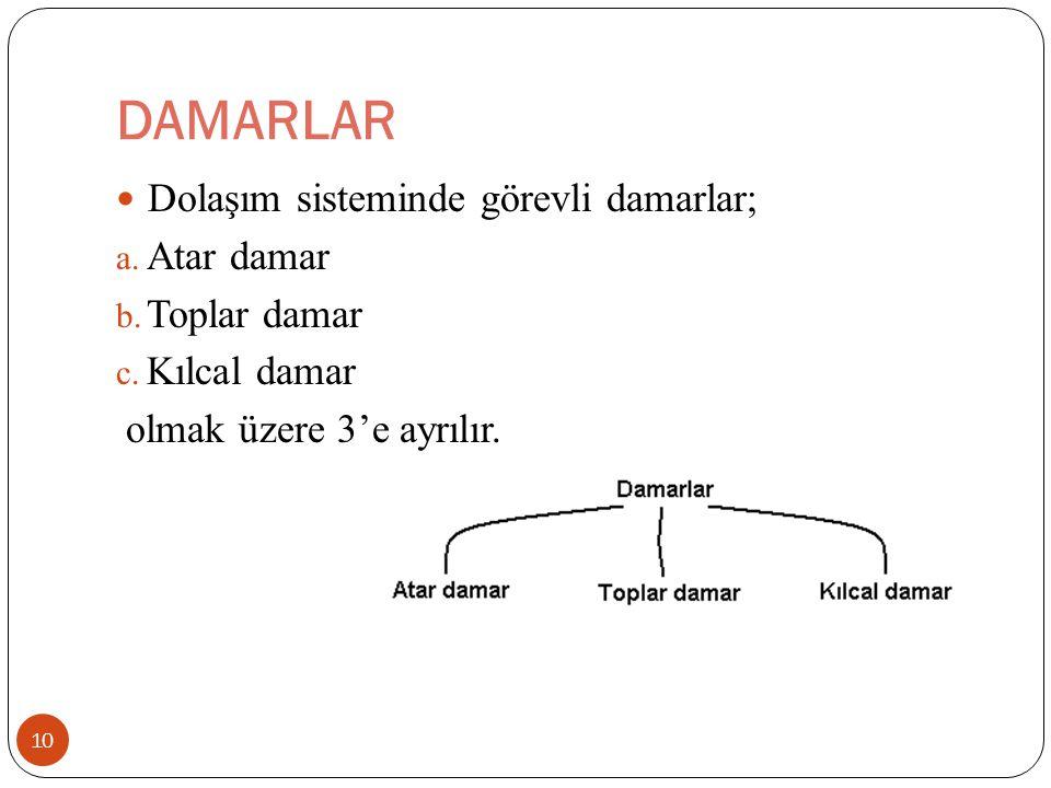 DAMARLAR Dolaşım sisteminde görevli damarlar; Atar damar Toplar damar