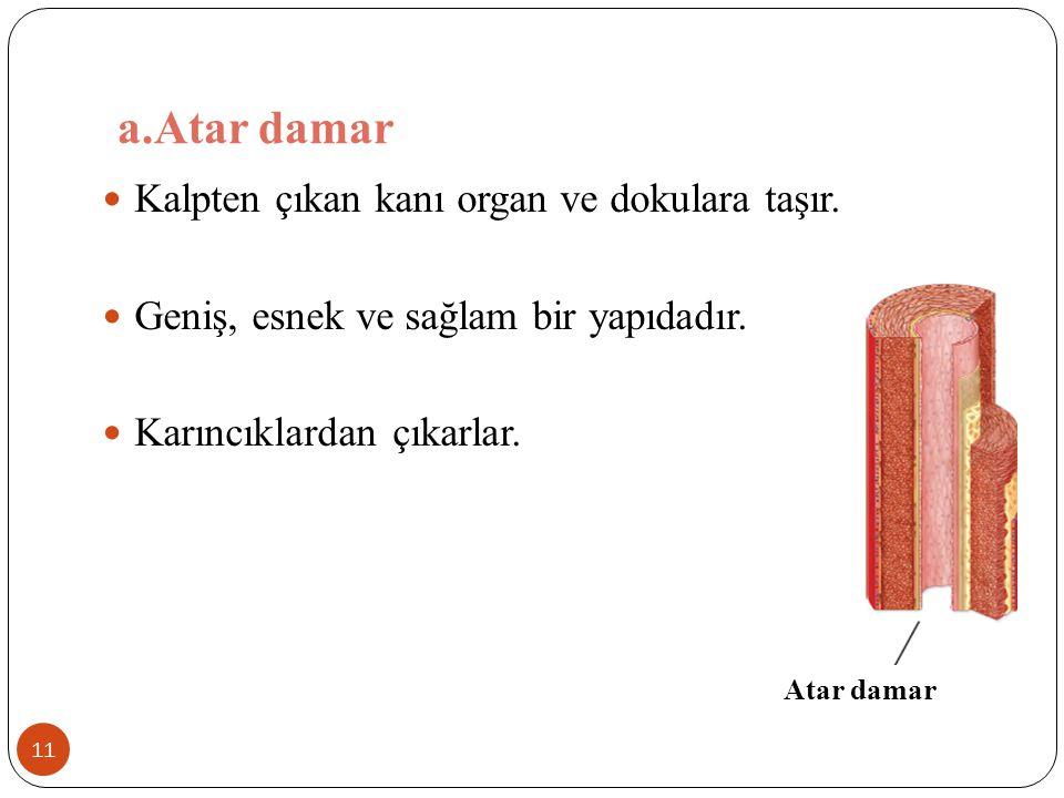 a.Atar damar Kalpten çıkan kanı organ ve dokulara taşır.