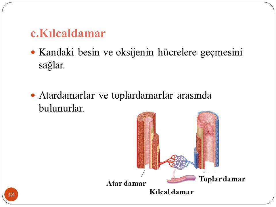 c.Kılcaldamar Kandaki besin ve oksijenin hücrelere geçmesini sağlar.