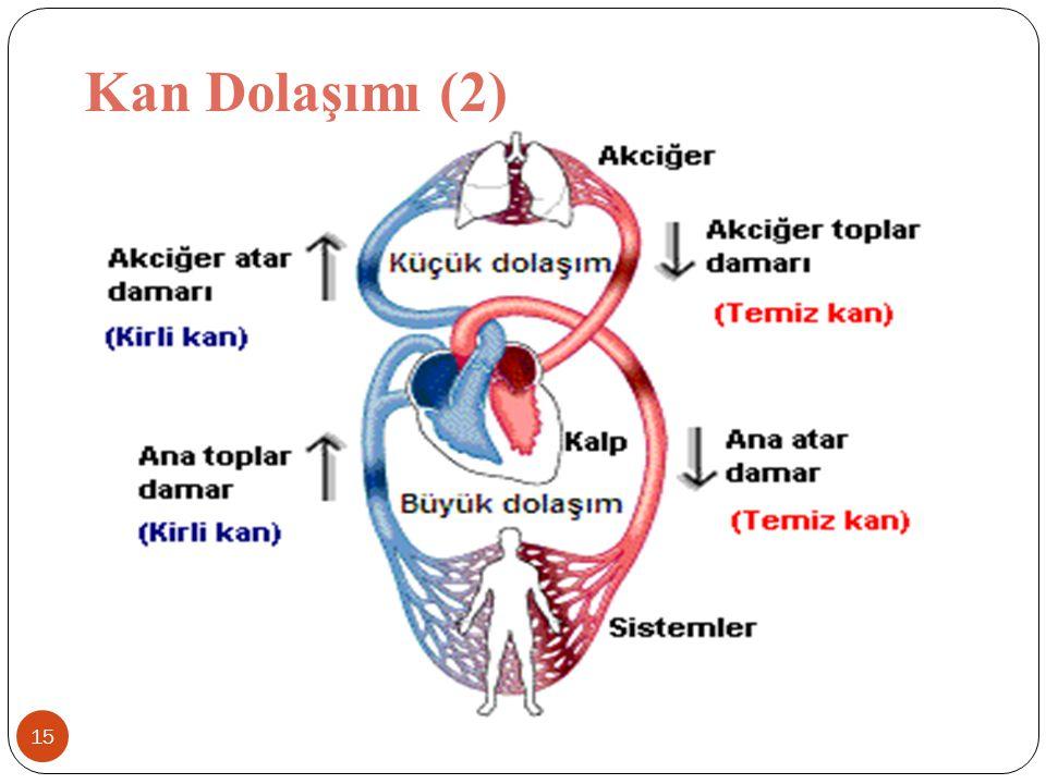 Kan Dolaşımı (2)