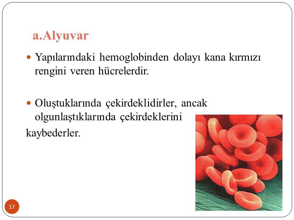 a.Alyuvar Yapılarındaki hemoglobinden dolayı kana kırmızı rengini veren hücrelerdir.