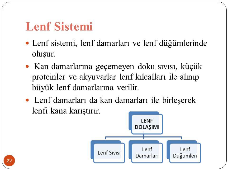 Lenf Sistemi Lenf sistemi, lenf damarları ve lenf düğümlerinde oluşur.